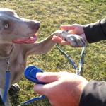 Training Your Puppy with Clicker Training