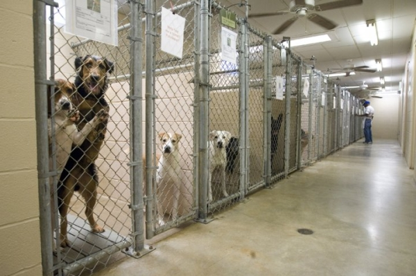 Dogs in an animal shelter