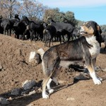Nurturing Our Working And Sporting Dogs – High Performance Food For High Performance Dogs