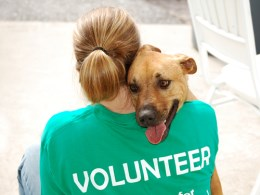 Pet Shelter Volunteer