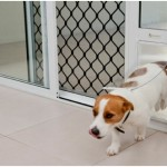 Why Dog Owners Need a Dog Door