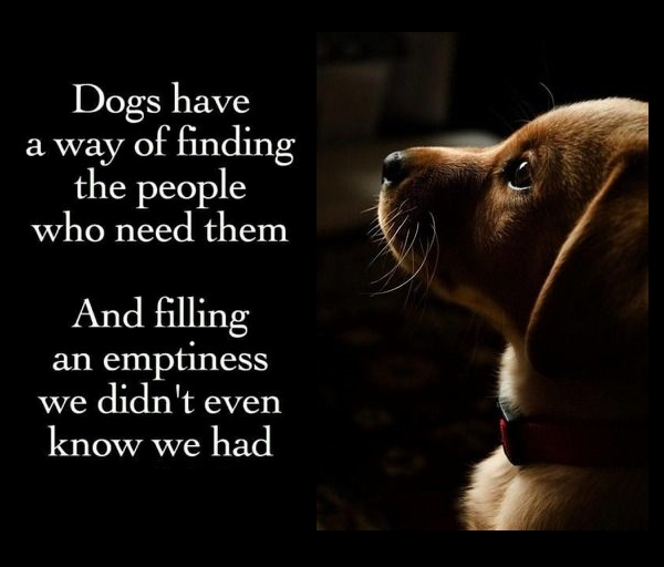 Dogs Find the People Who Need Them