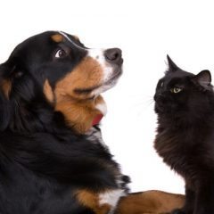 Cats can be mean to dogs
