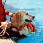 The Benefits of Canine Hydrotherapy
